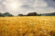 Липецкая агрокомпания «ТРИО» «настучала» на конкурентов из-за поврежденной сахарной свеклы