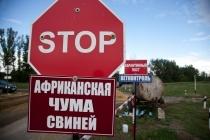 Вспышки вируса африканской чумы в Воловском районе угрожают заражением восьми населенным пунктам