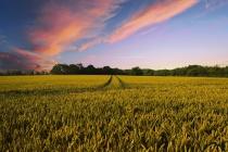 В Липецке суд приостановил деятельность партии «Возрождение аграрной России»