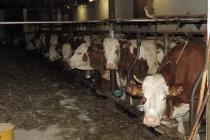 «Липецкая агропромышленная компания» к декабрю 2017 года приобретет брошенный молочный комплекс «Росагролизинга» на 1,2 тыс. голов