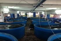 Липецкий рыбоводческий комплекс «Донской Стандартъ» инвестировал в проект 100 млн рублей