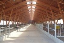 Липецкая компания «ДримВуд» завершает строительство завода деревянных конструкций за 80 млн рублей