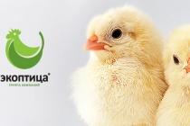«Экоптица» реконструировала птицефабрику за 700 млн. рублей