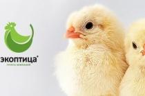 Липецкая «Экоптица» планирует расширить производство за 1 млн евро