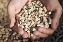 Липецкий завод по производству древесных гранул намерен в разы увеличить свои мощности