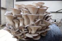 Липецкие грибоводы испытывают финансовые трудности в реализации своего проекта
