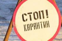 На молочном комплексе в Липецкой области ввели карантин по бешенству
