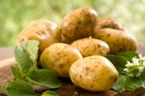Реализация картофельного проекта липецкой агрофирмы «Трио» может обойтись в 1,7 млрд рублей