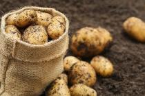Компания «Белая дача» реализовала почти половину своего картофельного проекта в ОЭЗ «Липецк»