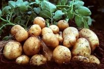 Банк ВТБ выделил «Лэм Уэстон Белая Дача» 5 млрд рублей на строительство картофельного завода в Липецке