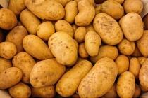 Торги липецкой картофельной станции за 648 млн рублей приостановили по неизвестной причине