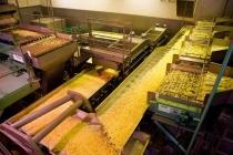 Бывший партнер «Белой дачи» по проекту картофельного завода в Липецке решил самостоятельно зайти в Брянск