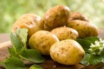 Руководство компании «Белая дача» пока не определилось с расширением картофельного завода в Липецкой области