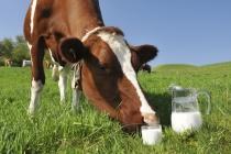 В Липецкой области поголовье скота и производство молока продолжают падать