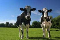 Липецкое СХП «Мокрое» готовится запустить молочный комплекс за 1,7 млрд рублей