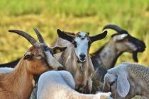 Объём производства продукции липецких животноводов приблизился к 47 млрд рублей