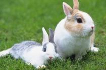 В Липецкой области за 15 млн. рублей планируют разводить кроликов