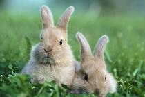 Строительство кролиководческого комплекса в Липецкой области за 256 млн рублей затягивается по вине проектировщиков