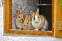 Пуск единственного кролиководческого комплекса в Липецкой области за 500 млн рублей намечен на декабрь 2018 года