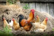 Прокуратура «наказала» крупнейшие липецкие птицефабрики за сброс отходов