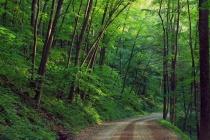 Даже плачевная экологическая ситуация не вдохновляет Липецкую область на создание зеленого щита?