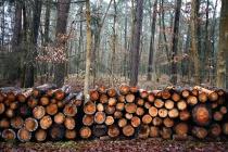 Вырубка леса для липецкой компании «ТЭК» и местного филиала «Квадра» закончилась уголовным делом