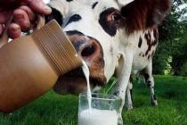 Липецкие животноводы реконструируют молочную ферму за счет областной субсидии