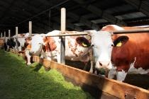В Липецкой области готовят к открытию новый молочный комплекс за 150 млн рублей