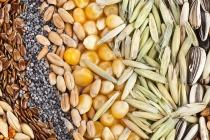 В Липецкой области оптовики могут получить срок за торговлю контрафактными семенами