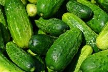 «Елецкие овощи» готовятся запустить вторую очередь своего тепличного комбината в Липецкой области