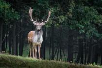 Китайцы проявили интерес к производству пантового сырья из оленьих рогов в Липецкой области