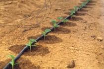Липецкий производитель систем капельного орошения намерен увеличить объемы производства в два раза
