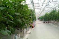 Две крупные компании готовы вложить в расширение теплиц в Липецкой области 17 млрд рублей