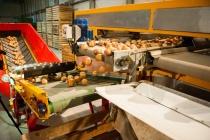 В Липецкой области построят предприятие по переработке овощей