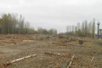 На компанию ДСК могут завести уголовное дело за вырубку деревьев