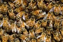 Виновник в массовой гибели пчёл в Липецкой области может отделаться мизерным штрафом