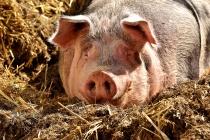 Имущество разорившегося липецкого свинокомплекса досталось компании из Санкт-Петербург за 3,4 млн рублей