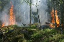 Партия «Новые люди» предложила защитить леса Липецкой области от пожаров