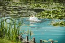 В Липецкой области планируют улучшить экологию водоемов за счет массового строительства зон санитарной охраны