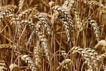 Компания «Рустарк» потратит на свой завод по производству биопластика из пшеницы в ОЭЗ «Липецк» 63 млрд рублей