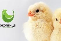 Липецкая ГК «Экоптица» одолжила у ВТБ 200 млн рублей