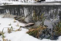 Загрязнение реки Усмань в Липецкой области и гибель рыбы довели до уголовного дела