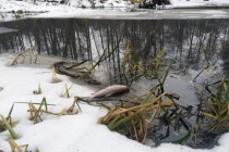 Липецкий областной водоканал не согласен платить штраф за сброс сточных вод в реку Усманка