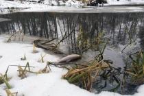 Росприроднадзор доказал причастность липецких «Овощей Черноземья» к загрязнению реки Усмань