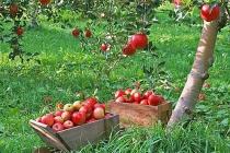 Липецкие садоводы расширят площадь садов и ягодников до 10 тыс. га