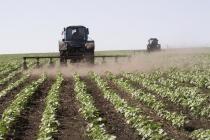 Главный производитель сахарной свеклы в Липецкой области для французского Sucden может приостановить работу
