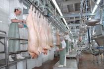 Группа «Черкизово» приступила к строительству нового свинокомплекса в Липецкой области за 1 млрд рублей