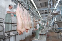 Группа «Черкизово» отодвинула запуск своего липецкого свинокомплекса за 400 млн рублей на 2017 год