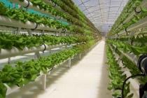 Компания «Елецкие овощи» сдаст первую очередь тепличного комплекса в Липецкой области в начале 2017 года