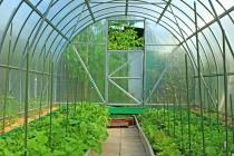 «Елецкие овощи» застраховались от рисков на 3,8 млрд рублей
